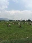 just outside Nyaung Shwe, paddy fields start